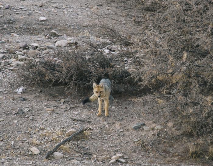 Tupiza Renard Desert